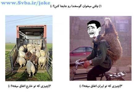 وقتی می خوان گوسفندارو جابجا کنن - ایران و اوپا