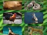 دانلود نرم افزار صدای حیوانات برای اندروید animal sounds